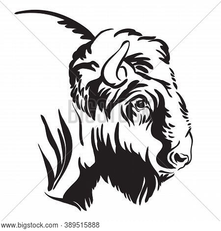 Abstract Contour Portrait Of The Bison Vector