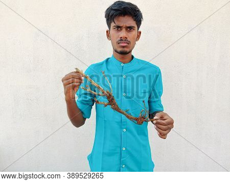South Indian Man In Cyan Shirt Showing A Stem With Roots Of A Small Plant. Save Trees Concept, Isola
