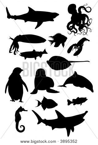 Animal Collection 3