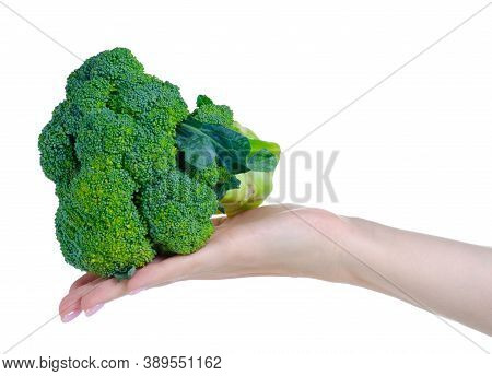 Fresh Broccoli Raw Food In Hand On White Background Isolation