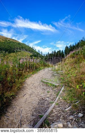 Mountain Trail Through A Glade In Lejowa Valley In Tatra Mountains In Poland, With Pink Fireweed (ch