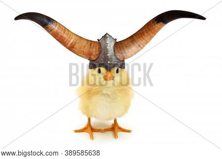 Horned chick Viking with helmet funny conceptual photo isolated on white background