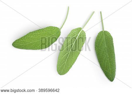 Sage Herb Leaves Isolated On White Background With Clipping Path . Top View. Flat Lay