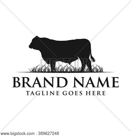 Angus Cow Logo Your Company Or Brand
