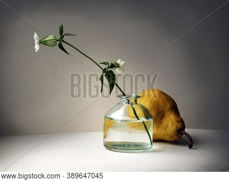 Still Life With Pear And Silene Vulgaris Flower (bladder Campion Or Maidenstears) In The Small Glass