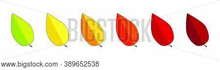 Autumn Leaves Divider. Fall Or Thanksgiving Vector Leaf Line. Illustration Of September, October Or