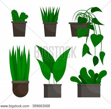 Flowers Growing In Pots Set Isolated On White. Evergreen Houseplant In Flowerpot Natural Decoration