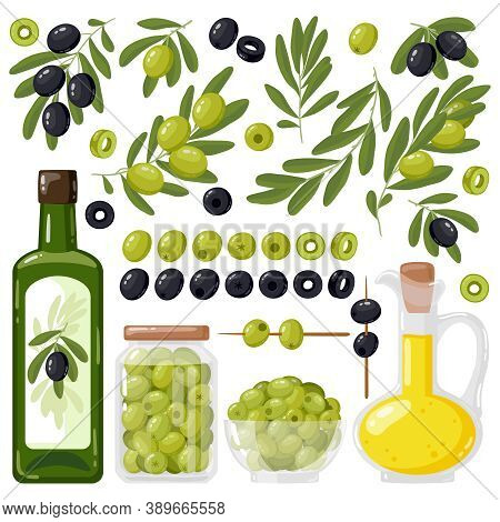 Cartoon Olive. Black And Green Olives, Olive Tree Branches And Extra Virgin Olive Oil, Healthy Organ