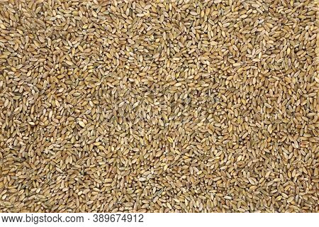Freekah rice healthy food forming a background. High in protein, fibre, vitamins, minerals with carotenoids for healthy ageing also good for bone and muscle health. Flat lay, top view.