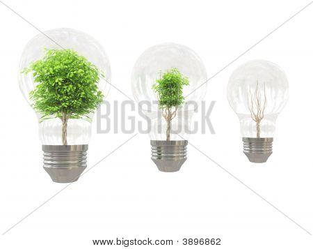 Tree In Bulb