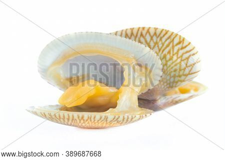 Close Up Of Baby Clam Isolated ,short-necked Clam,carpet Clam Or  Venus Shell