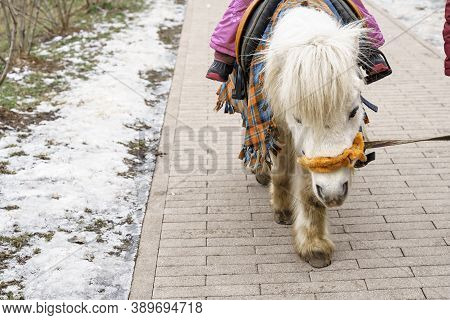 Pony Ride A Child In Winter. Sad Pony Tired Of People