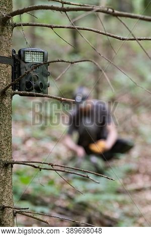 Hunting Camera In Camouflaged Colors Attached To Spruce Tree, Hunter Visible In Background. Hunting,