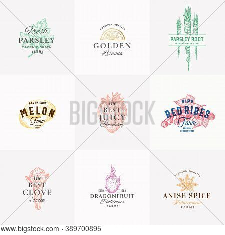 Premium Quality Fruits, Herbs And Vector Signs Or Logo Templates Collection. Hand Drawn Parsley, Mel