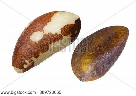 Brazil Nut Isolated Closeup Without Shell As Package Design Element Collection On White Background.