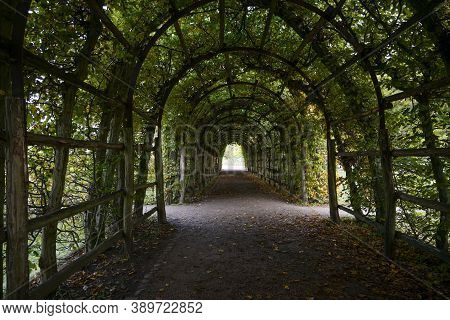 Arbor Way From Hornbeam With Pergola In A Large Public Park, Selected Focus, Narrow Depth Of Field