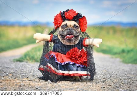 Funny French Bulldog Dog Dressed Up With 'la Catrina' Halloween Costume With Red And Black Dress Wit