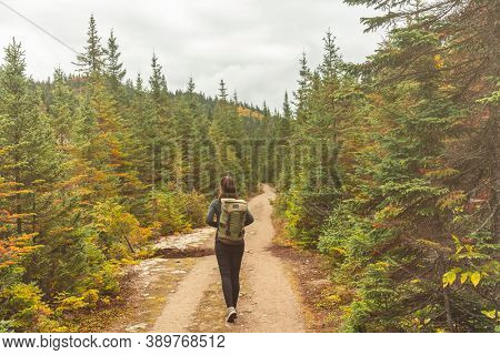 Canada hiker travel woman walking on trail hike path in forest of pine trees. Canada travel adventure girl tourist trekking in outdoors nature.