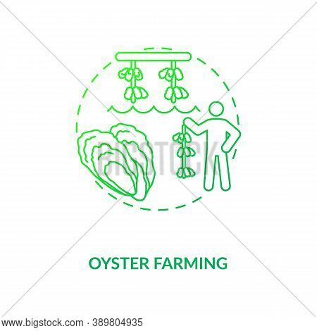 Oyster Farming Concept Icon. Luxury Seafoods Growing. Healthy Organic Foods Variety. Shellfishes Pic