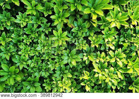 Green Plant Texture