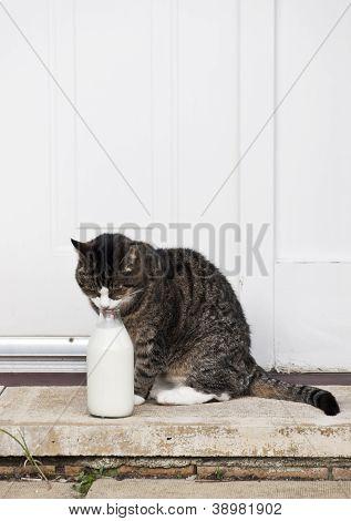0588 Cat With Milk Bottle