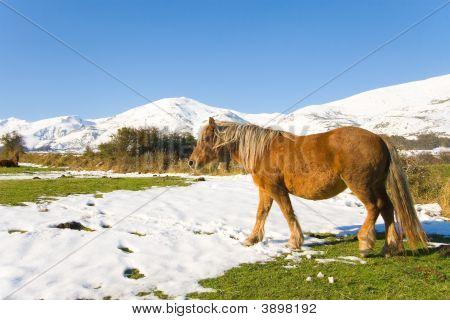 Horse In Alto Campoo