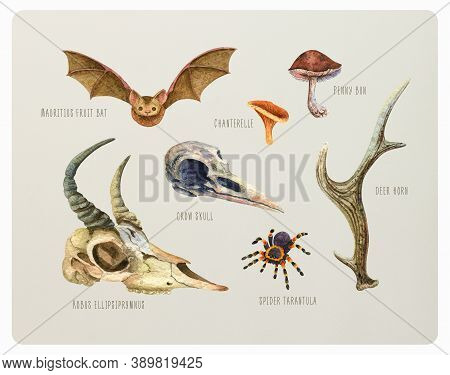 Vintage Watercolor Set Of Animals And Mushrooms. Crow And Goat Skulls, Bat, Chanterelle, Porcini, An