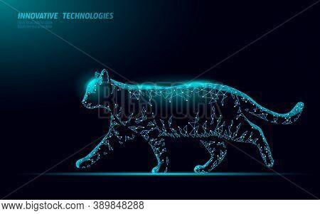 Cat Silhouette Veterinary Clinic Banner Template. Black Cat Character Halloween Spooky Dark Feline.