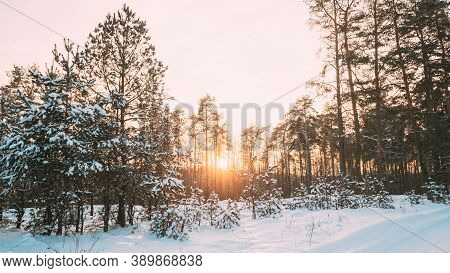 Sunset Sunrise Over Forest. Yellow Color Sky Over Winter Snowy Wood. Landscape Under Sky At Sunset D