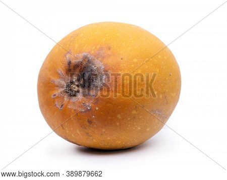 Rotten pumpkin isolated on white background