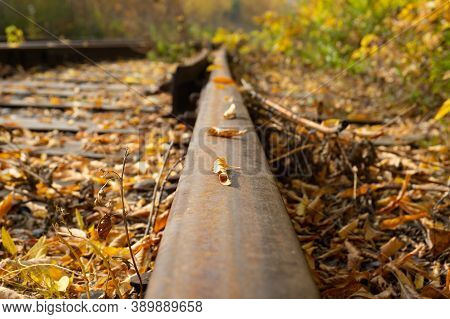 Fallen Leaves On The Railway Tracks. Railway Rail Close-up, Round Yellow Leaves. Rusty Rail. Clear A