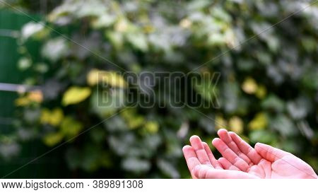 Closeup Of Wet Fingers Of Little Child In Rain. Kid Plays In Drizzle Collecting Droplets In Hands. S
