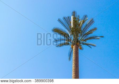 Base Radio Station Or Telecommunication Tower Disguised As A Palm Tree At Morocco. Equipment For Of
