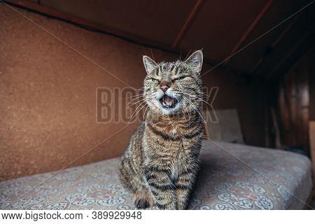 Funny Portrait Arrogant Short-haired Domestic Tabby Cat Relaxing At Home Indoors. Little Kitten Love