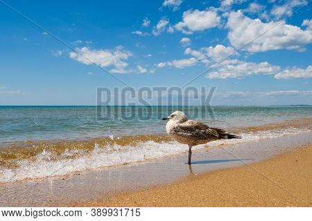 The Seagull Stands Against The Backdrop Of A Beautiful Seascape And Cloudy Sky. A Seabird Stands At