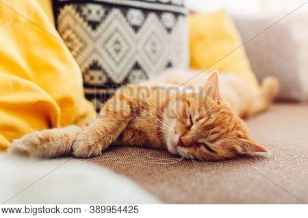 Cat Pictures, Cat Eyes, Cute Cat, Innocent Cat Pictures, Close-up Cat Pictures, Pictures Of The Most