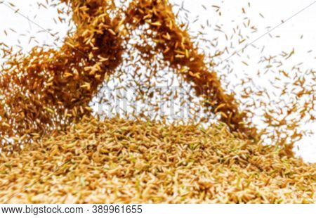 Blurred Paddy Rice For Background, Jasmine Rice Paddy Blur, Yellow Gold Paddy Rice For Background