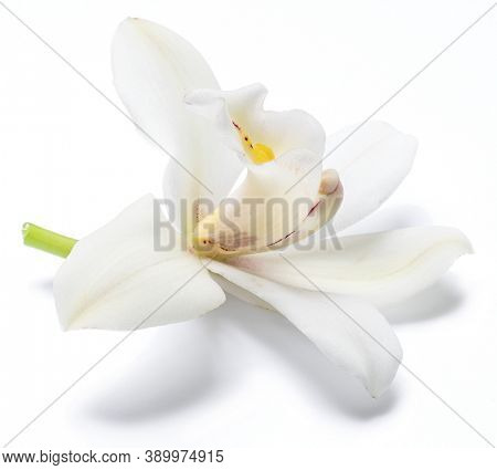 Vanilla orchid vanilla flower isolated on white background.