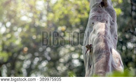 Close Up Of Tree Trunk That Looks Like An Elephant Trunk