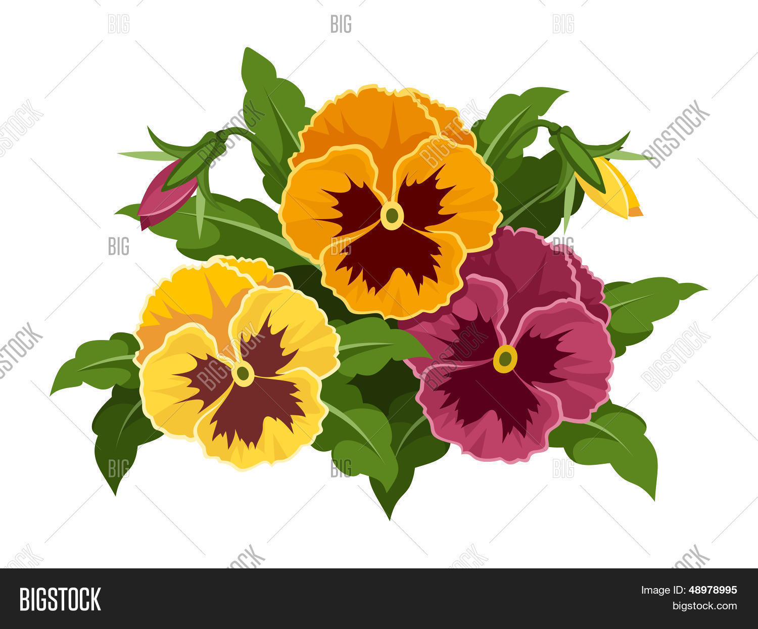 Pansy Flowers Vector Vector Photo Free Trial Bigstock