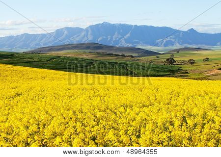 Agricultural Land Overlooking Snow Capped Mountain Range