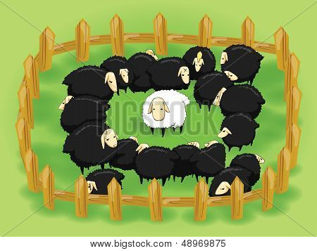 White Sheep In The Flock Of Black Sheep (opposite Side)