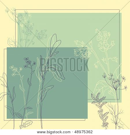 line drawing herbs, vector illustration. This is file of EPS8 format. poster