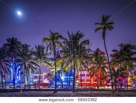 MIAMI, FLORIDA - JANUARY 6, 2014: Palm trees line Ocean Drive. The road is the main thoroughfare through South Beach.