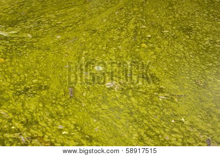 Unsanitary Surface Of Neglected Algae Infested Water