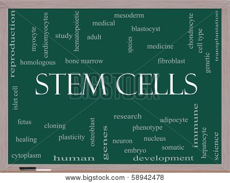 Stem Cells Word Cloud Concept on a Blackboard with great terms such as research human medical and more. poster