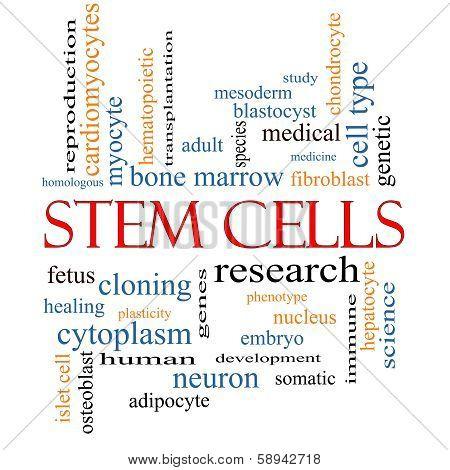 Stem Cells Word Cloud Concept