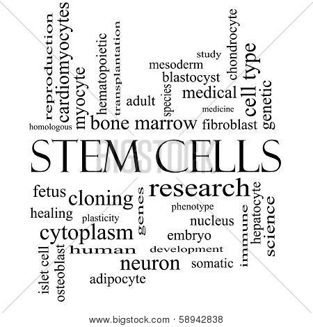 Stem Cells Word Cloud Concept In Black And White