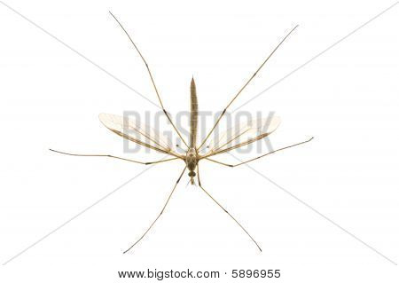Daddy Longlegs From Above
