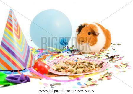 Guinea Pig Is Celebrating His Birthday